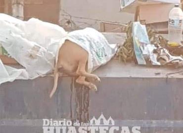 Tiran animales muertos a contenedor de basura