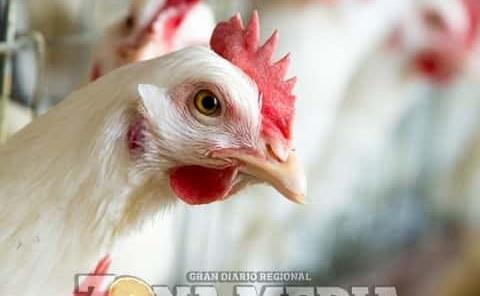 Alertan por gripe aviar