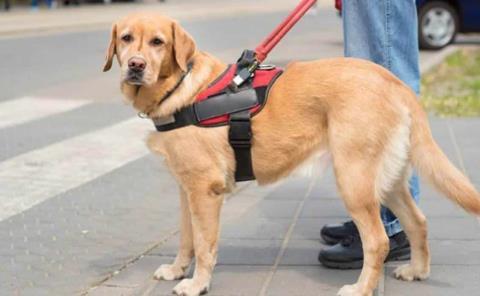 Perros podrán ir en  transporte público