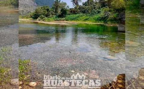 Lirio acuático afecta al río