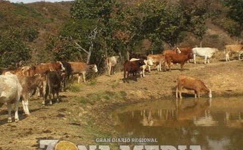 Lluvias beneficiaron al sector ganadero