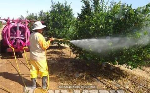 En riesgo campaña contra plaga de fruta