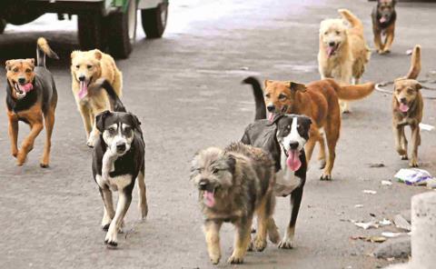 Eliminarán a los perros callejeros