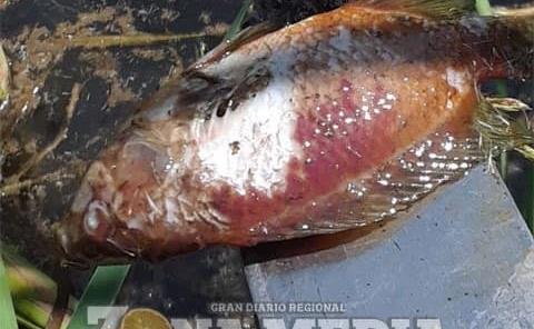 Mortandad de peces