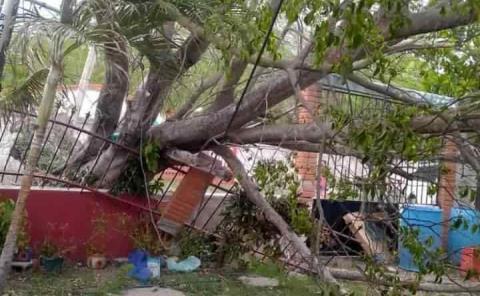 Lluvia provocó  caída de árboles