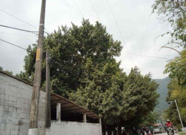 Piden reportar árboles en riesgo de colapsar