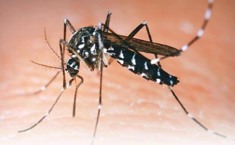 Sólo cuatro casos de dengue en la entidad