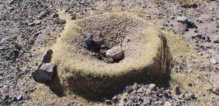 Hormigas afectan casas y comercios