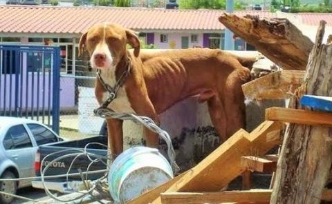 Pretenden eliminar la crueldad animal