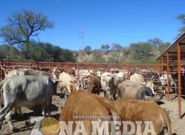 Necesario regenerar genética del ganado