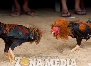 Continúan peleas de perros y gallos