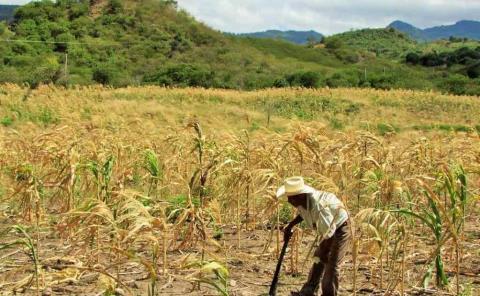 Afecta la sequía a 16 municipios