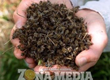 Apicultura en riesgo por mal uso de pesticidas