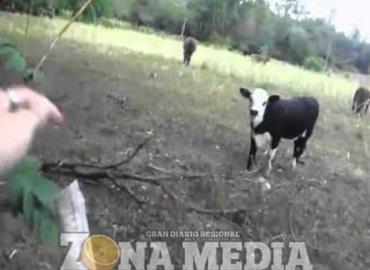 Cazadores matan al ganado en localidad