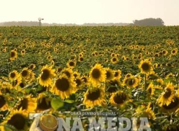Agricultores pretenden formar una cooperativa
