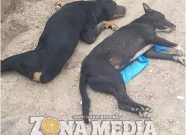 Causó malestar la matanza de perros