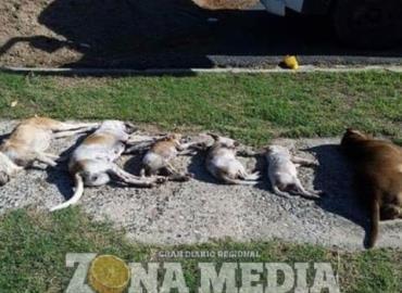 """$120,000 por el """"mata perros"""""""
