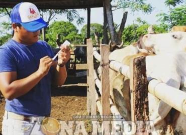 Protegen ganado con la vacunación