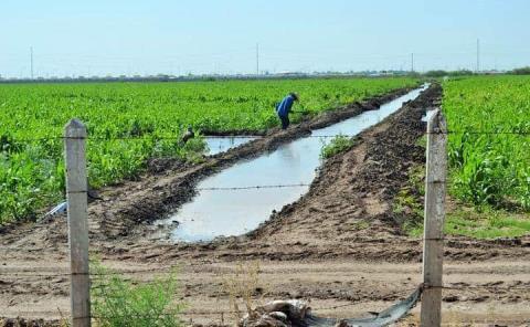 Lluvias benefician al campo en la región