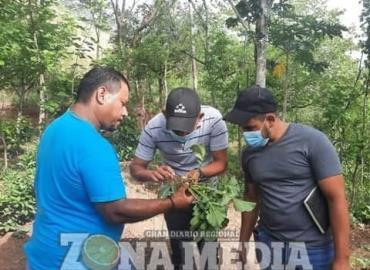 Enseñarán a familias a producir alimentos