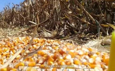 Carencia de granos causó eleven costos