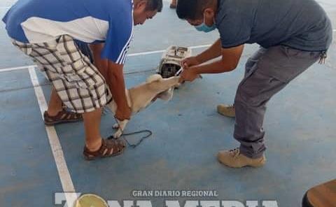 Vacunan perros y gatos en hospital