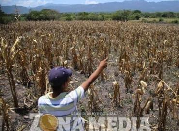 Campesinos cerritenses fuera del Seguro Agrícola