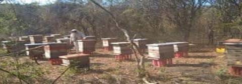 """Afectan apicultura los """"insecticidas"""""""