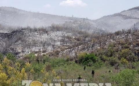 Serranías tardarán 150 años en recuperarse