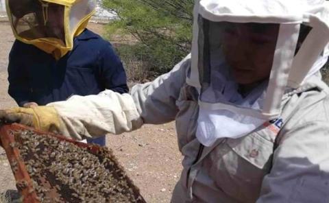 Lluvias elevan la obtención de miel