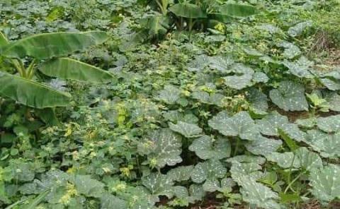 Campesinos auguran una buena siembra