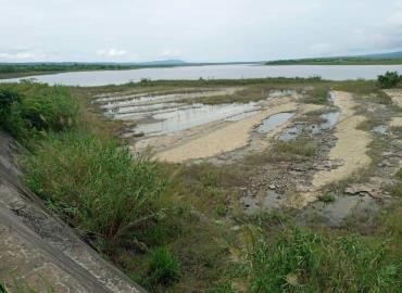 """Avistan lagartos en """"Laguna del Mante"""""""