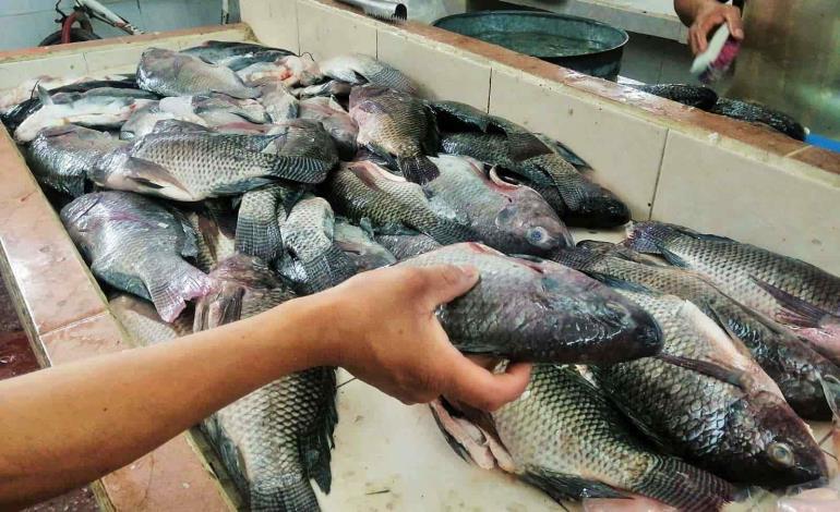 A la baja precios de pescados y mariscos