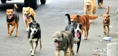 Aumenta población de perros callejeros