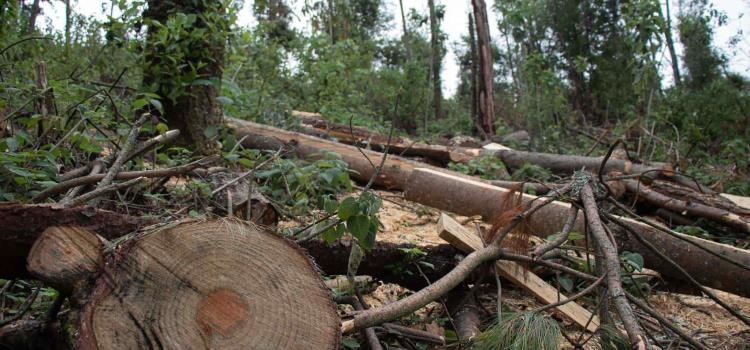 Talan bosques de forma ilegal