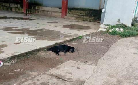 Investigan muerte de casi 50 perros