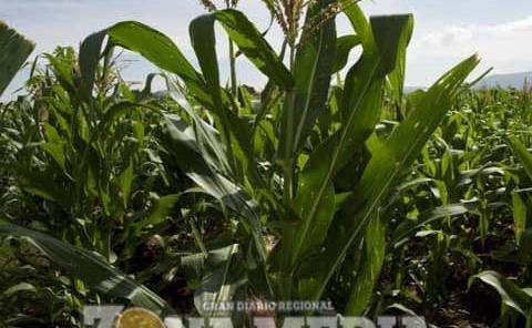 Creció producción agropecuaria en SLP