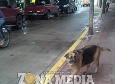 Urgen albergues para los animales