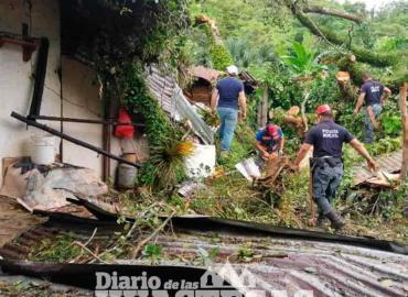 Vivienda afectada por caída de árbol