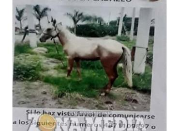 Piden apoyo para encontrar caballo