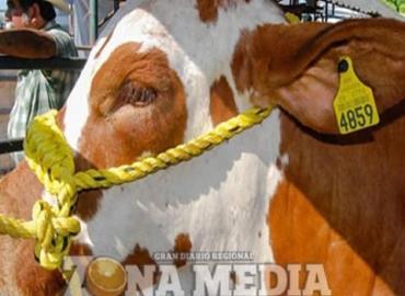 El ganado debe de ser areteado