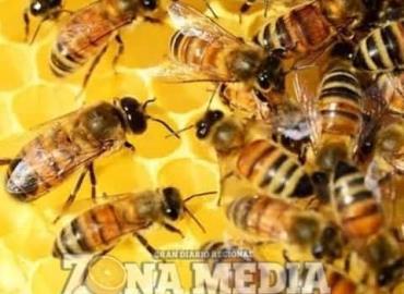 Apicultores piden cuidar las abejas
