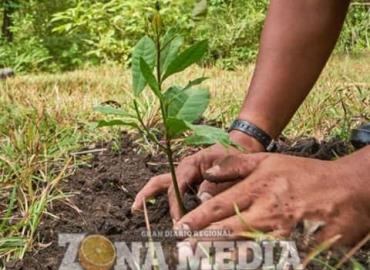 Exhortan a cuidar las áreas verdes
