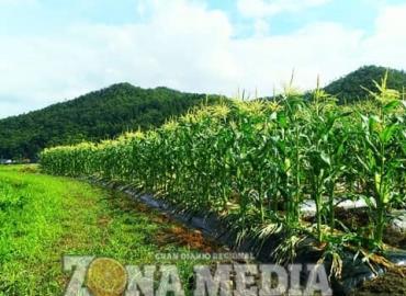 Terminó sequía en Cerritos: Conagua