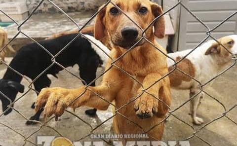 Prevalecen casos de mascotas maltratadas