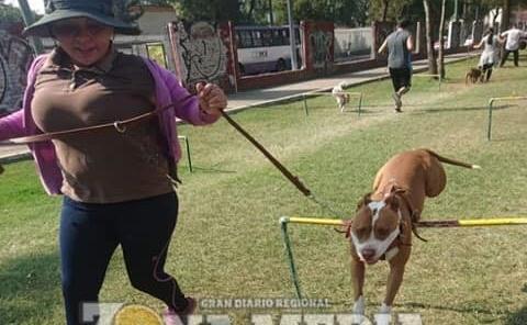 Aumenta interés de adiestramiento canino