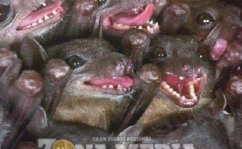 Capturan a murciélagos