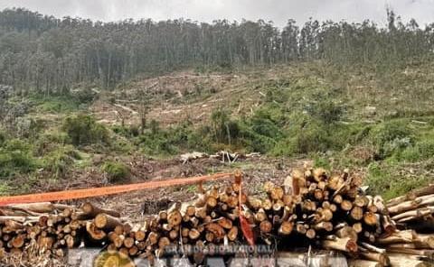 Denuncian tala de árboles en la sierra