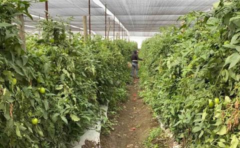 SLP décimo productor agrícola en el país