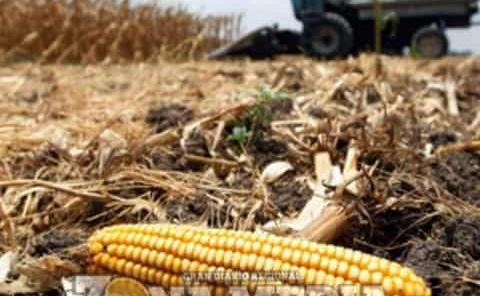 Aumenta población y el desabasto de alimentos